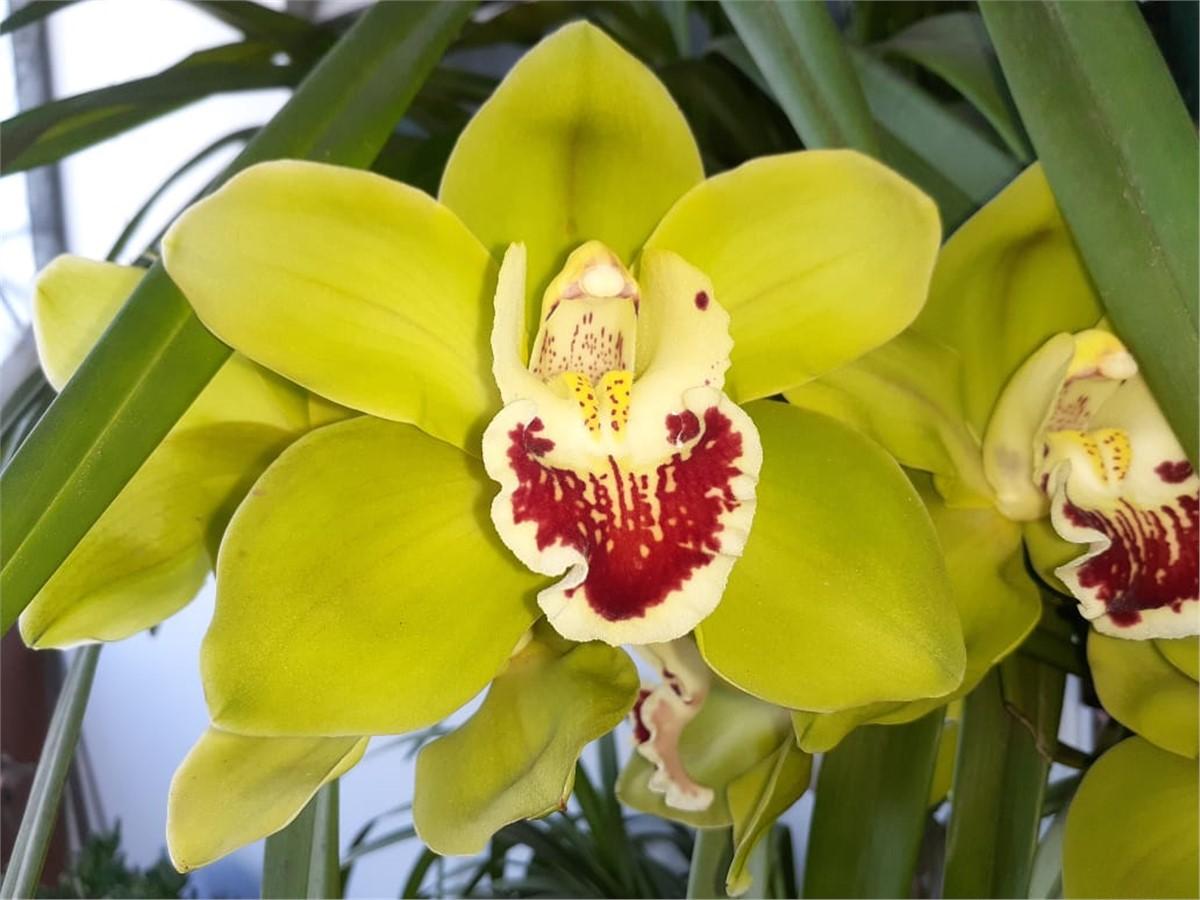 Foto Dopler Agencia de Diseño - Gentileza Nélida Cerdá Coleccionista de Orquídeas platenses, nuestra flor preferida. Todos los derechos reservados.