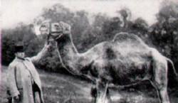 El camello old Joe fotografiado para la campaña publicitaria.